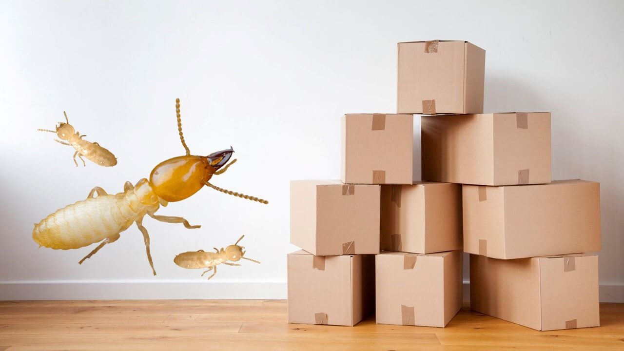 Do cardboard boxes invite termites?
